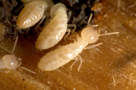 WE CAME, WE SAW, WE CONQUERED THE TERMITES